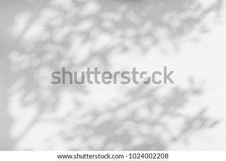 Abstract gray shadow background of natural leaves tree branch falling on white wall texture for background and wallpaper, black and white monochrome tone