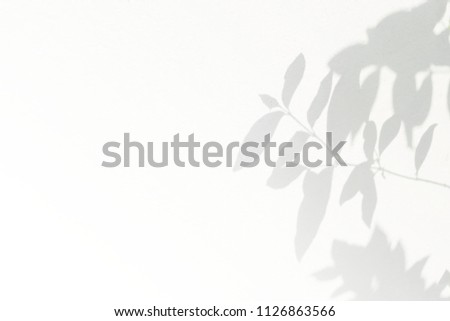 Abstract gray shadow background of natural leaves tree branch falling on white wall texture for background and wallpaper, black and white monochrome tone, with copy space