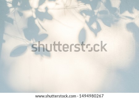 Abstract gray shadow background of natural leaves tree branch falling on white wall texture for background and wallpaper, black and white,  nature shadow pattern art on wall