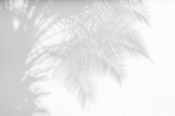 Abstract gray shadow background of natural palm leaves, trunk and palm tree branch falling on white wall texture for background and wallpaper, black and white monochrome tone