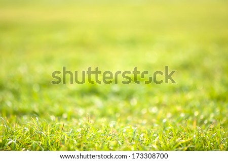 abstract green background - bokeh fresh morning pattern lawn grass dew park meadow sun colorful refreshing dawn