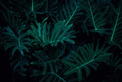 abstract green fern leaf texture, dark blue tone nature background, tropical leaf