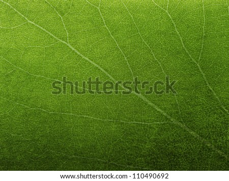 stock photo abstract green leaf texture for background 110490692 - Каталог — Фотообои «Текстуры»