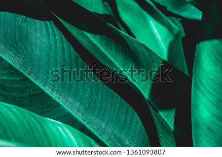 abstract green leaf texture, nature background, tropical leaf #1361093807