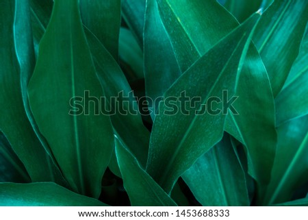 abstract green leaf texture, nature background, tropical leaf #1453688333