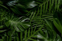 Abstract green leaves nature texture background.( Monstera,palm,coconut,banana,fern)Creative layout for design