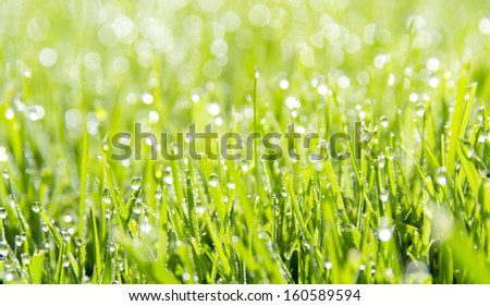 Abstract green natural background. Fresh spring grass with drops on natural defocused light green background.