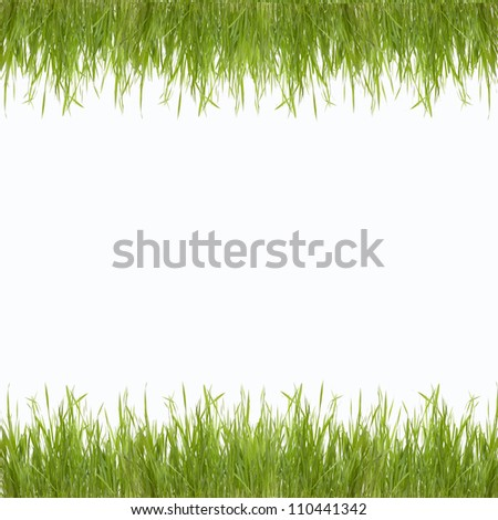 Abstract green  nature background with grass