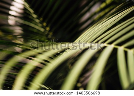 abstract green striped, tropical palm leaf texture, natural line pattern, nature background