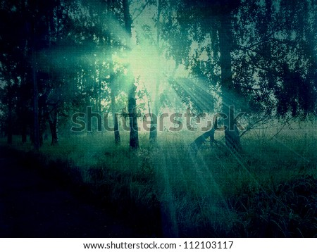 Abstract grunge image of dark forest background.