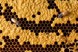 abstract honeycomb with bee texture background
