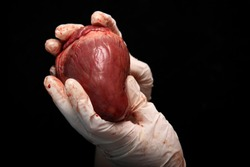 abstract illegal organ transplantation. A human heart in the hand of a surgeon woman. International crime. Assassins in white coats. Death and money. transplant isolated. Organ trafficking theft.