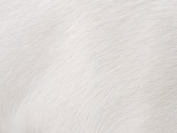 Abstract image created from sheep's fur and make a white background.This image is warm and gentle.