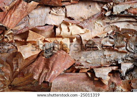 Abstract image of birch tree bark