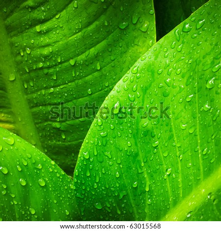 Abstract image of water drop on  leaves in nature