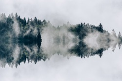 Abstract image with foggy forest that looks like sound-waves.