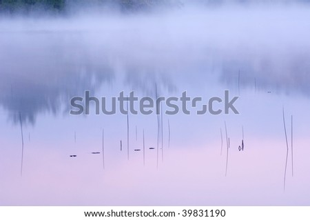 Abstract landscape of reeds and reflections in calm water at dawn, Hall Lake, Yankee Springs State Park, Michigan, USA