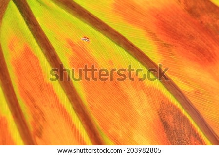 Abstract Leaf - African Plant and Nature Background - Frosted Art in the Outdoors