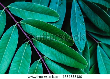 Abstract leaf texture background #1364658680