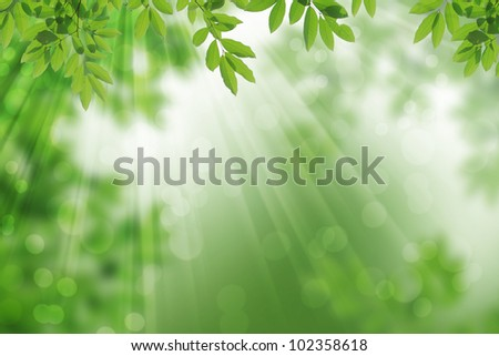 abstract  leaves frame with rays of light.