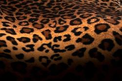 Abstract Leopard print with selective focus, black leopard spots texture design, dark leopard background.