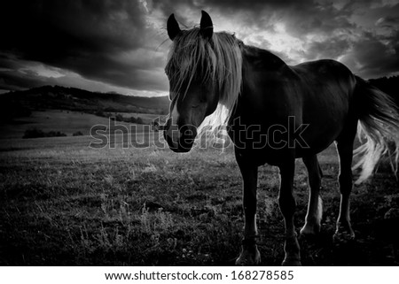 abstract low light black and white horse portrait against dramatic sky