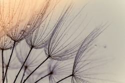 Abstract macro photo of dandelion seeds. Shallow focus. Old style. Vintage foto