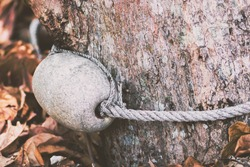 Abstract matte background of water buoy with rope attached to tree with the brown dry leaves on the ground with copy space