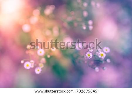 Abstract meadow landscape. Beautiful summer flowers landscape