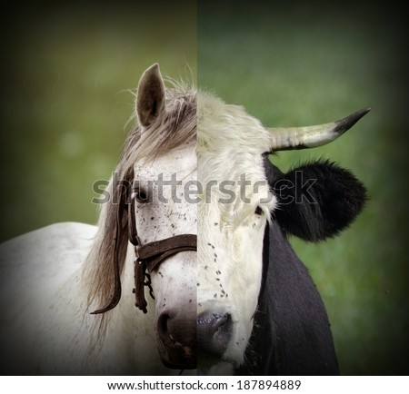 abstract montage of cow and horse heads put together like one animal