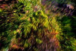 Abstract, motion-blurred, dense foliage on mountainside in vibrant yellow-green and earthy tones