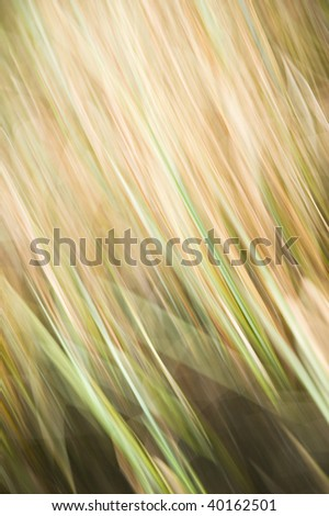 abstract motion-blurred nature-based background