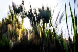 Abstract, motion-blurred, shades of green and yellow vegetation under blown-out sky background texture