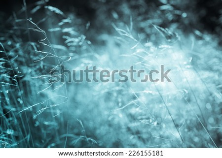 Abstract natural background. Fresh spring grass on natural defocused light background. Black and white photography. Monochrome blue cold tone.