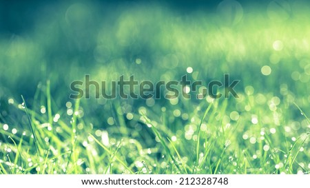 Abstract natural background. Fresh spring grass with drops on natural defocused light green background. Retro filtered.  Cross process,