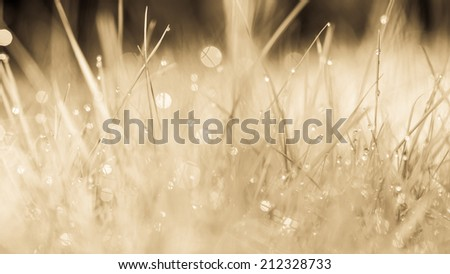 Abstract natural background. Fresh spring grass with drops on natural defocused light orange background. Retro filtered. Cream tone.