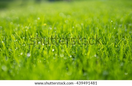 Abstract natural background of green grass and beauty blurred bokeh. Selective focus close up for abstract blurred in shot.