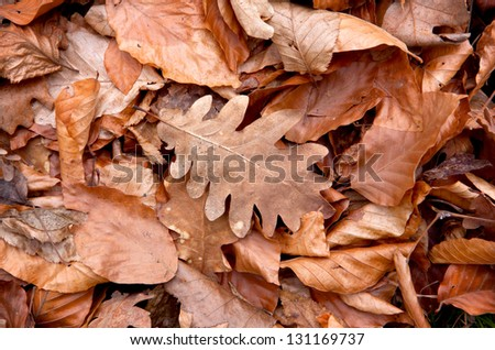 abstract natural background with autumn leafage