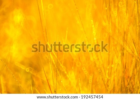 Abstract natural background with grass, natural bokeh