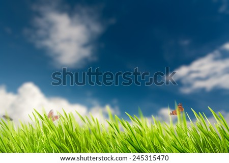 Abstract natural backgrounds with summer foliage and bright sunlight