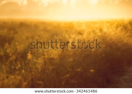abstract natural blur background, defocused leaves, bokeh, nature background #342461486