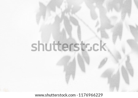 Abstract natural leaves shadow background of tree branch falling on white concrete wall texture for background, black and white monochrome tone