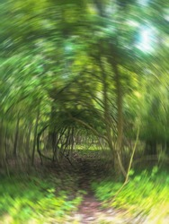 Abstract natural spring green and dappled sun, lovely swirled background wallpaper around a tunnel of vines. Eye is drawn inward, Nature, enchantment copy space, delicate shading, movement texture