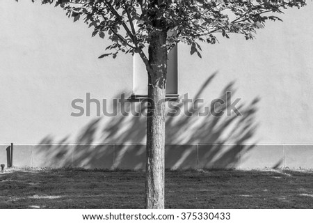 Abstract nature background. Light and shadow background. Abstract design. Minimal design and background. Tree and branch background. Tree shadows.