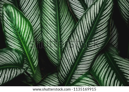 Abstract nature Green leaf background and beautiful wallpaper.