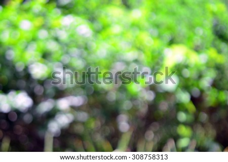 Abstract nice background of blurred tree with beautiful lens effect (De-focus photo)