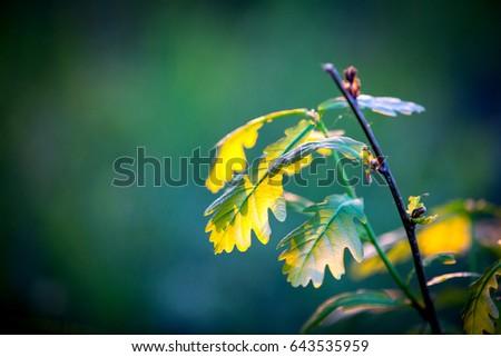 abstract oak twig in sunlight #643535959