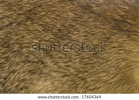 Abstract of fox fur as background
