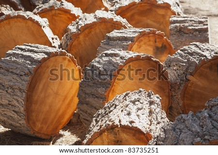Abstract of Freshly Cut Pine Logs in the Afternoon Sunshine.
