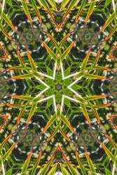 abstract of palm tree frond with color from sun damage 2686